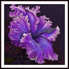 'Hibiscus Fever' by Debra Bucci Framed Painting Print in Purple