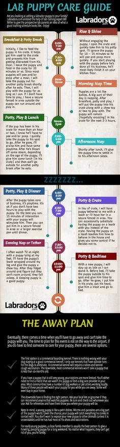Infographic on training your puppy!!