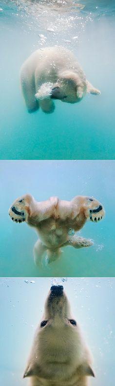 exPress-o: Aww-worthy Polar Bear!