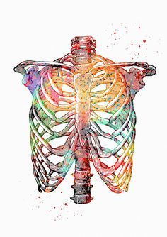 Check out this awesome 'Rib+Cage' design on Medical Drawings, Medical Art, Human Anatomy Art, Anatomy Drawing, Medical Wallpaper, Biology Art, Human Body Art, Science Art, Bunt