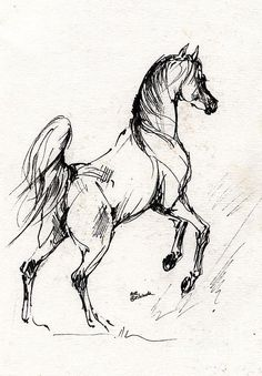Horse Sketch #drawing by Angel Tarantella #326 of 3476