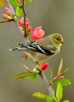 25 Most Beautiful Bird Photography examp. - Beautiful Bird photography is one of the most challenging types of nature photography, but remains - Most Beautiful Birds, Animals Beautiful, Cute Animals, Chicken Pictures, Bird Pictures, Photos Of Birds, Cute Birds, Pretty Birds, Birds 2