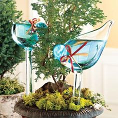 Bird Plant Feeders, Glass Plant Feeders, Water Plants while Traveling   Solutions