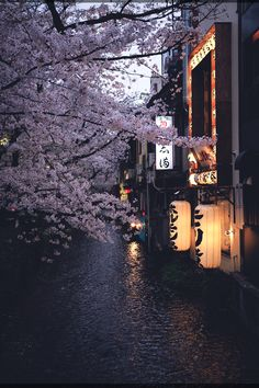I really want to go to Kyoto, it seems like this whole board is just filled with pictures of Kyoto