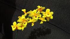 Herthal art's: mini orquídea em e.v.a