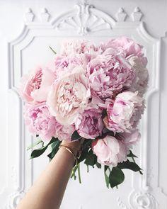 Pink peonies <3