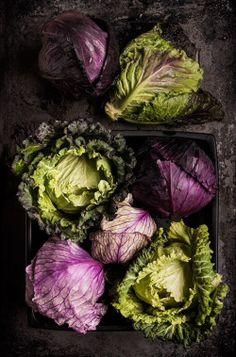 elemenop:  Cabbage   Pamela Joe McFarlane
