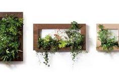 「インテリア 壁面緑化 DIY」の画像検索結果