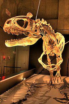 #Cryolophosaurus #dinosaur