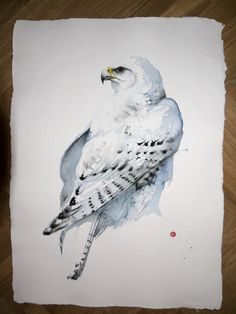 Gyr Falcon by Karl Martens, 2013, (watercolor on paper), 30 x 22 inches. A…