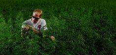Discovering Legal CBD: Hemp vs. Marijuana