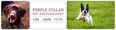 Sacramento Pet Photographer – Purple Collar Pet Photography logo