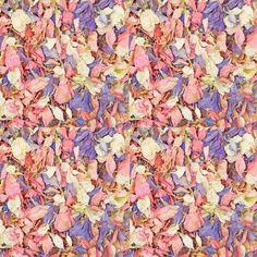 Pink Purple Summer Mix Freeze Dried Delphinium Petals