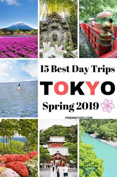 Looking for day trip destinations from Tokyo? Here are the BEST spots in spring! You will learn all about what to see and how to get there. Tokyo Disney Sea, Tokyo Disney Resort, Tokyo Disneyland, Japan Travel Tips, Tokyo Travel, Asia Travel, Hitachi Seaside Park, Day Trips From Tokyo, Japanese Travel
