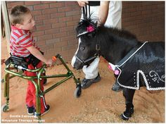 Therapy horse Magic meets a new friend.