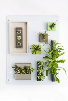 Vertical wall gardens.