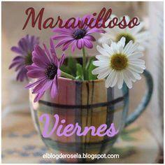 """"""" De Todo Un Poco """": Maravilloso viernes."""