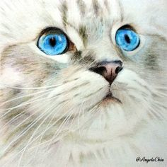 Credit to @mycrazycatfamily to inspire me of watercolor tone sketch