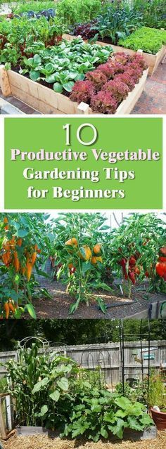 See these effective vegetable gardening tips for beginners. The secret to productive garden lies in the outset of several activities. The following 10 tips will help you to create a more productive and less maintenance vegetable garden.: #gardeningforbeginners