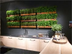Cool Herbs for the Kitchen