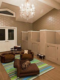 pitbull room