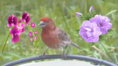 At My Birdfeeder:Red -Winged Black Birds,Finches And Doves!