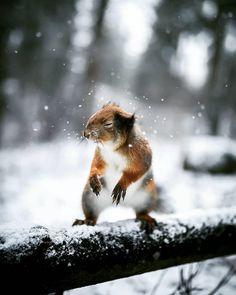 http://animalfactsblog.com/where-do-squirrels-sleep/