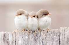 adorable little birds