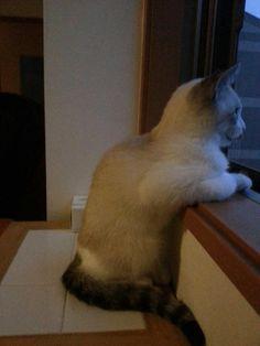 ウチの猫可愛すぎてワロタから皆見て! - http://iyaiyahajimeru.jp/cat/archives/58209
