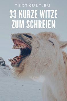 33 Witze zum Schreien: Sprüche   Quotes   Zitate   lustig   witzig   Witze   Schenkelklopfer   lachen   positiv   Motivation   Leben   lustige Sprüche