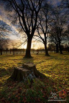 Sunrise In Phoenix Park Dublin Ireland