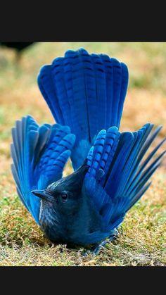 Most Beautiful Birds, Pretty Birds, Love Birds, Exotic Birds, Colorful Birds, Beautiful Creatures, Animals Beautiful, Kinds Of Birds, Tier Fotos