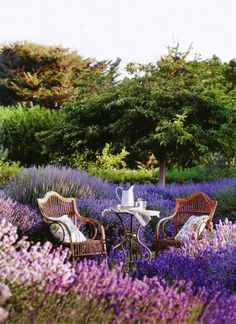 Provance-Home-Style-tea-time-in-lavander Provance-Home-Style-tea-time-in-lavander