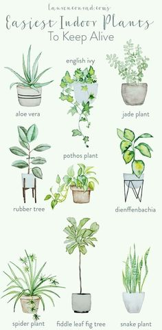 easy houseplants - easy indoor plans - green thumb - pothos plant - aloe vera - rubber tree maintenance - spider plant - fiddle leaf fig tree - snake plant - houseplants for beginners Natural Home Decor, Easy Home Decor, Diy Garden, Home And Garden, Garden Modern, Garden Planters, Garden Hose, Plantas Indoor, Pothos Plant
