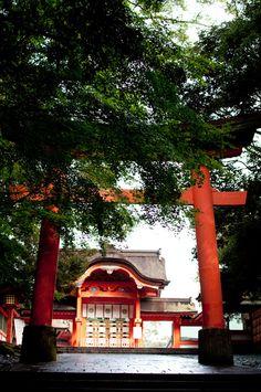 usajingu shrine #japan #oita