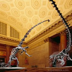 The American Museum of Natural History. Dinosaurs!