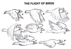 안녕하세요 블라인드입니다 오늘은 새 날개 그리는법을 가르쳐주겠습니다. 이것은 새나는 ...