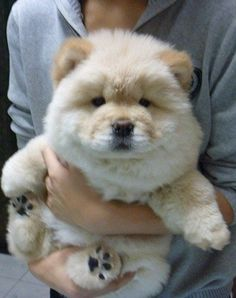 Chow Chows. It's so fluffy (even tho they get big the puppies are cute lol)