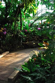 Tropical scene from the Orchid Room at @Phipps Conservatory. I really prefer their natural setting for displaying orchids. - Wife, Mother, Gardener
