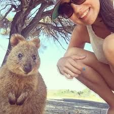 The Quokka is an adorable marsupial that lives in Australia. It's illegal to handle these cute creatures due to their 'vulnerable' status listed by the IUCN. Happy Animals, Animals And Pets, Funny Animals, Cute Animals, Wild Animals, Quokka Animal, Perth, Meanwhile In Australia, Little Critter