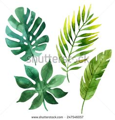 Four tropical leaves. Hand drawn leaves illustration in watercolor.