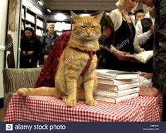 Resultado de imagem para cat Bob