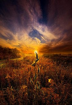 """""""Can I Stay With You Awhile""""  Horizons by Phil Koch. Lives in Milwaukee, Wisconsin, USA. http://phil-koch.artistwebsites.com"""