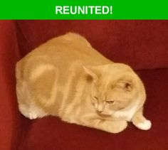 Great news! Happy to report that this pet has been reunited and is now home safe and sound! :)