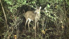 #DNR Working to Stop the Spread of CWD - WILX-TV: WILX-TV DNR Working to Stop the Spread of CWD WILX-TV LANSING, MI. (WILX) - Deer hunting…