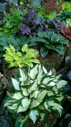 32 Interesting Side Yard Garden Design Ideas And Remodel. If you are looking for Side Yard Garden Design Ideas And Remodel, You come to the right place. Below are the Side Yard Garden Design Ideas An. Garden Types, Garden Paths, Garden Art, Garden Beds, Shade Garden Plants, Hosta Plants, Plants For Shade, Shaded Garden, Garden Shrubs