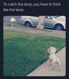 To catch the lamp, you have to...
