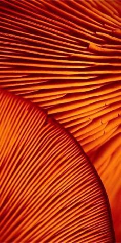 Pingl par hermione jalaver sur motifs pinterest nature courbes f minines et motifs for Peinture orange brule