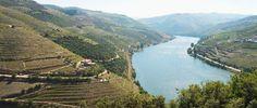 Les vins mythiques - 4. Porto Taylor's Vintage. Les vignes de la vallée du Douro au Portugal