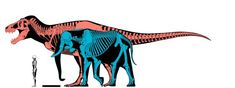 Who would win in a fight between an elephant and a T. rex? - Quora Prehistoric Age, Prehistoric Animals, Dinosaur Art, Tyrannosaurus Rex, Jurassic World, T Rex, Fossils, Moose Art, Elephant